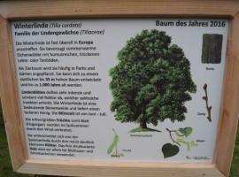 Baum des Jahres 16 (3)